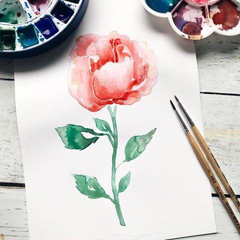 Rose malen mit Aquarell